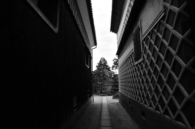 nozaki_9464[1]