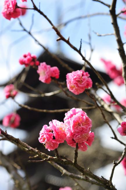 kokubunji_0036[1]