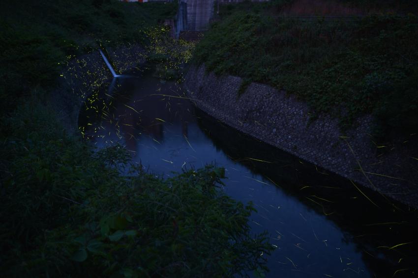 sikawa_20130602_01[1]