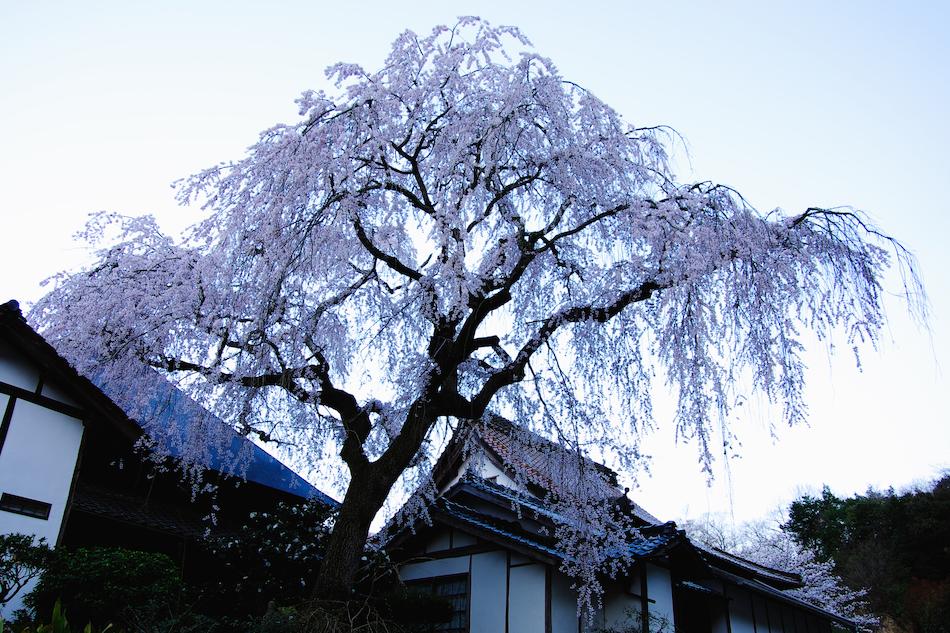 fukusenbo_1813[1]