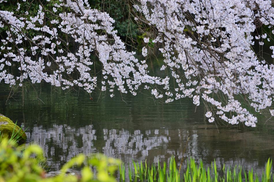 kyotogyoen_20140329_005[1]