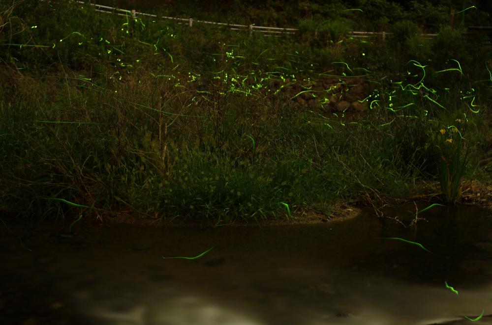 20150522_hotaru_07[1]
